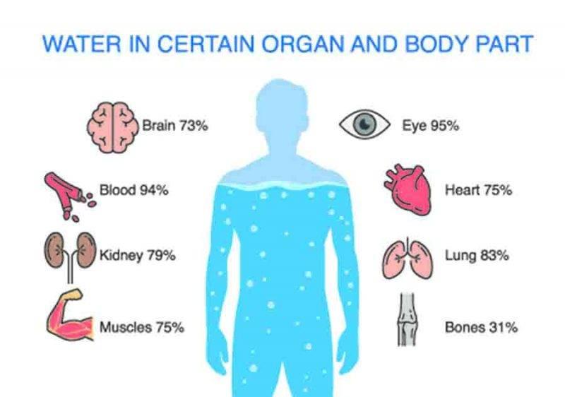 acqua corpo