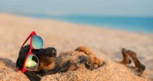 cani come proteggerli dal caldo estivo
