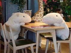 peluche di capibara a tavola