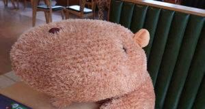Peluche di capibara