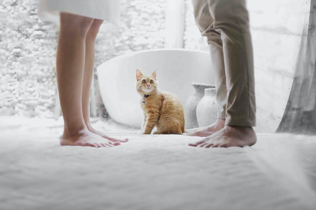 gatto coppia