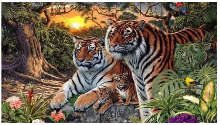 test tigri osservazione