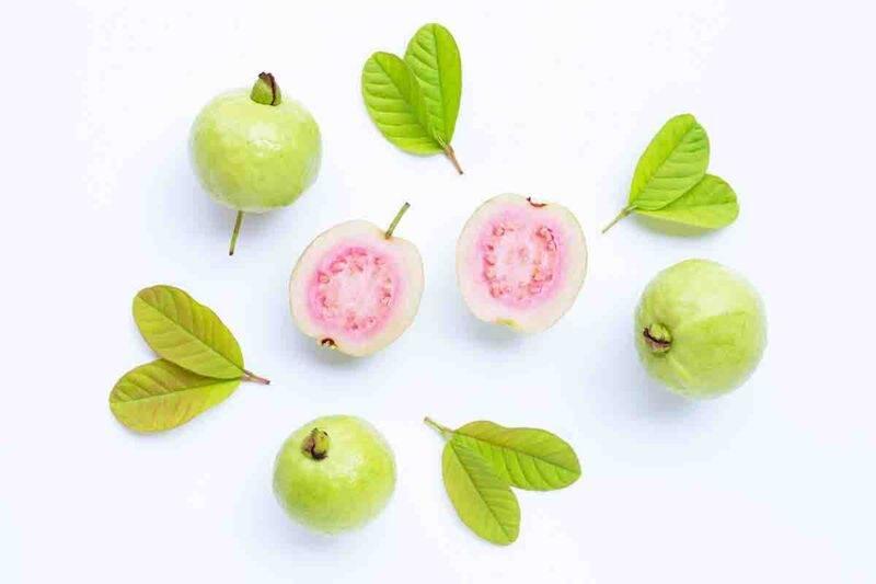 guava frutto e foglie