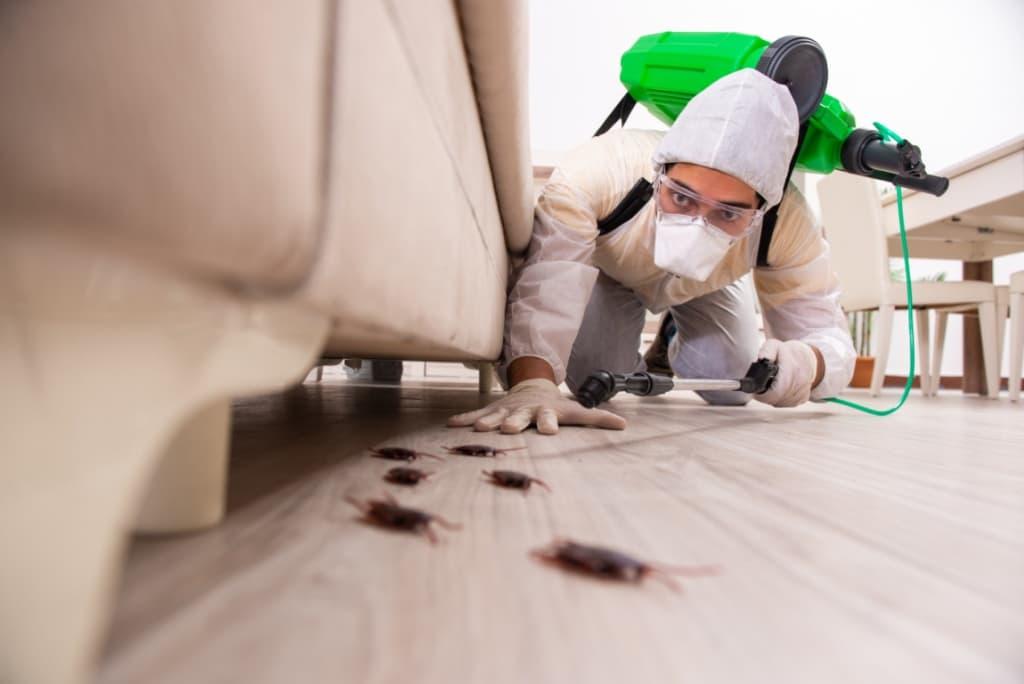 infestazione scarafaggio