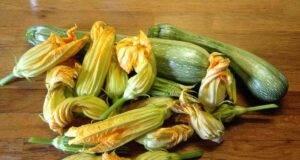 ricette con fiori di zucca