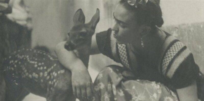 Frida Khalo - Cervo