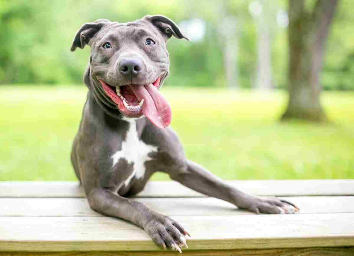 Vivere con un cane fa bene alla salute