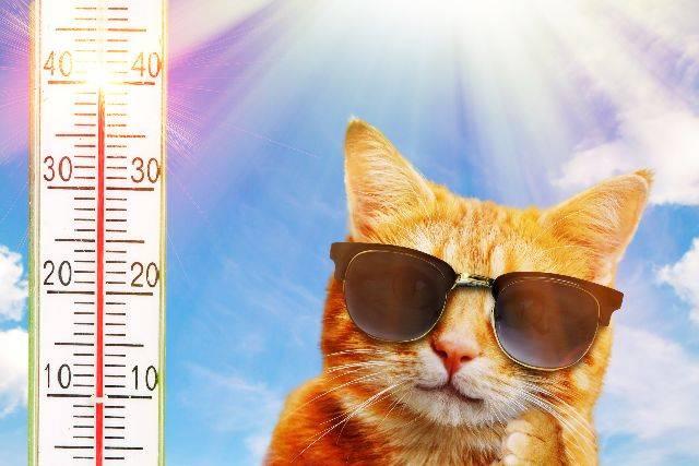Arriva il caldo torrido: ecco come affrontarlo