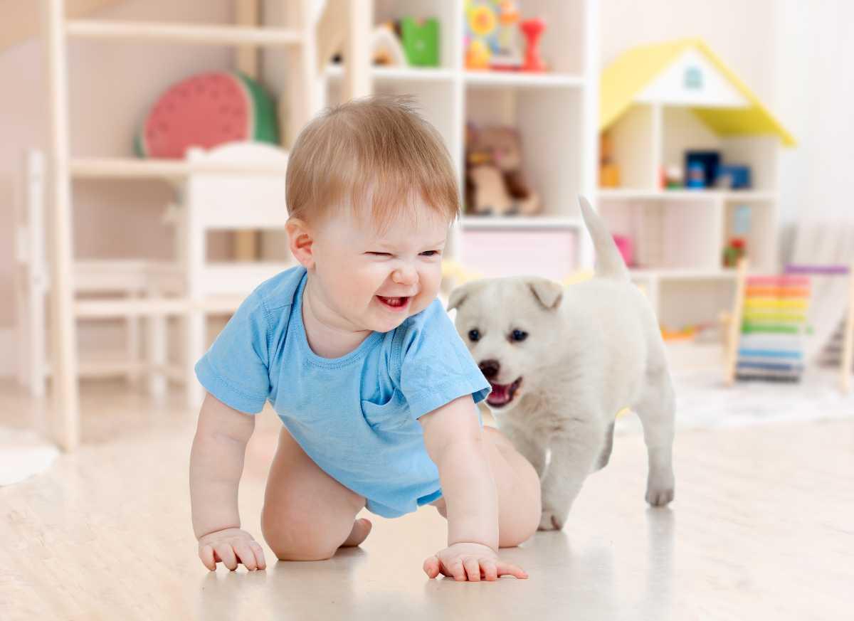 Bambino e cane le principali zoonosi che si possono trasmettere