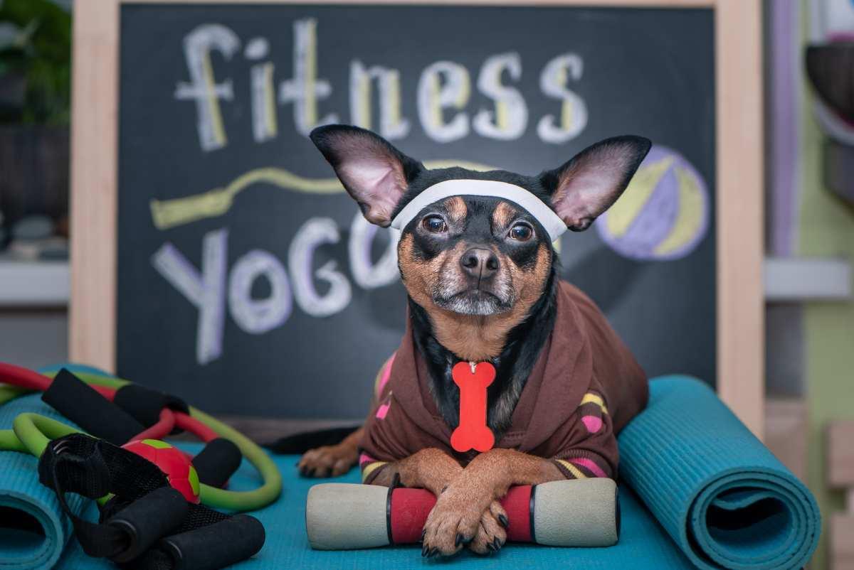 Fitness con il cane