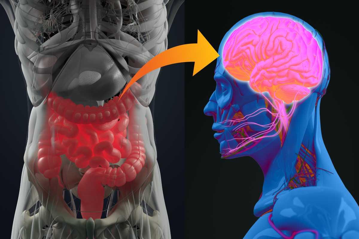 connessione intestino e cervello