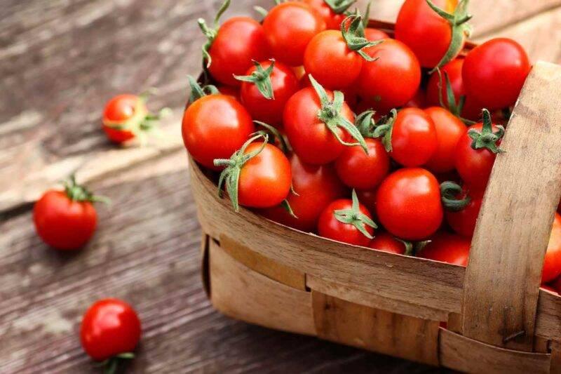 troppi pomodori fanno male