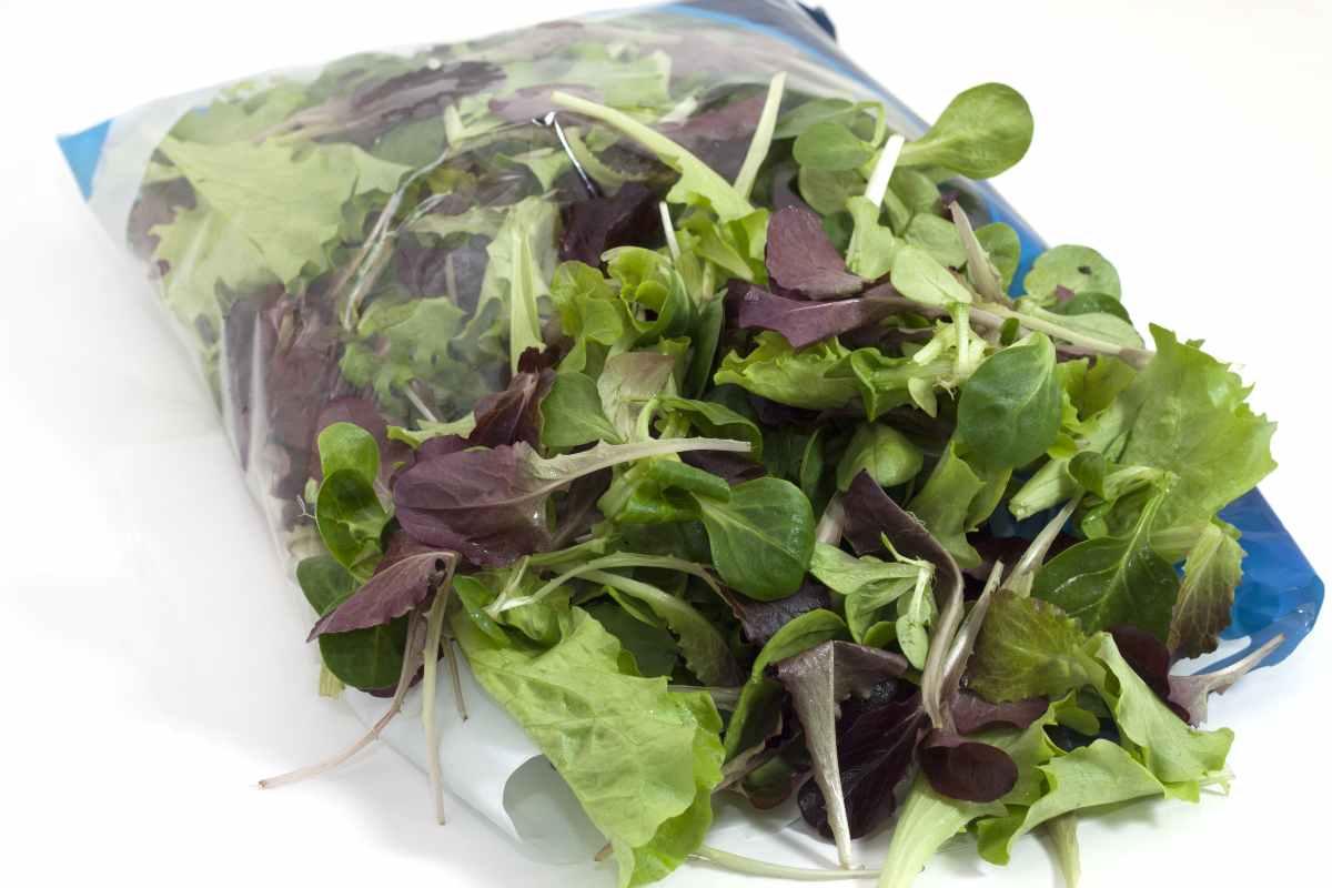 insalata in busta