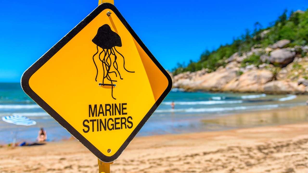 puntura medusa rimedi naturali