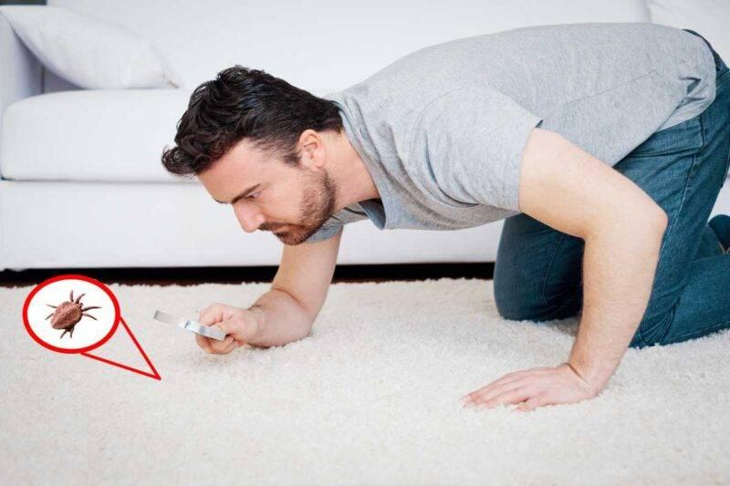 Eliminare gli acari della polvere a casa