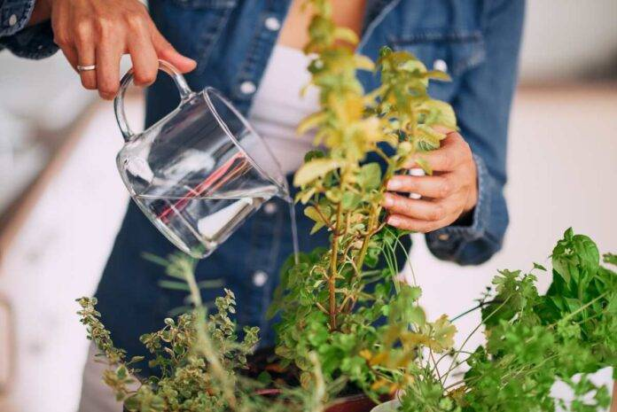 Come fare l'orto a casa: tutti i trucchi utili