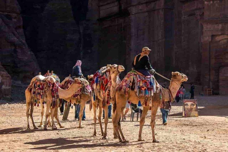 cammelli e mussulmani