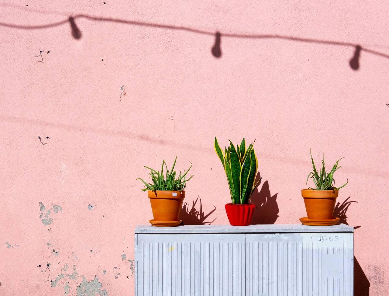 """Sansevieria ed Aloe Verde piante indistruttibili anche per chi ha il """"pollice nero"""""""
