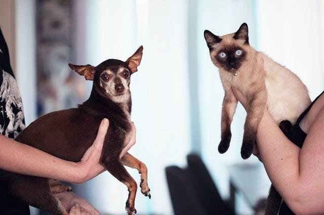 cane o gatto scappati