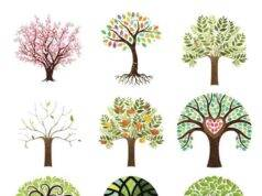 albero test