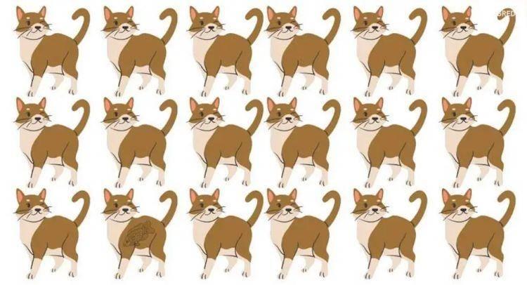 test gatti  percezione