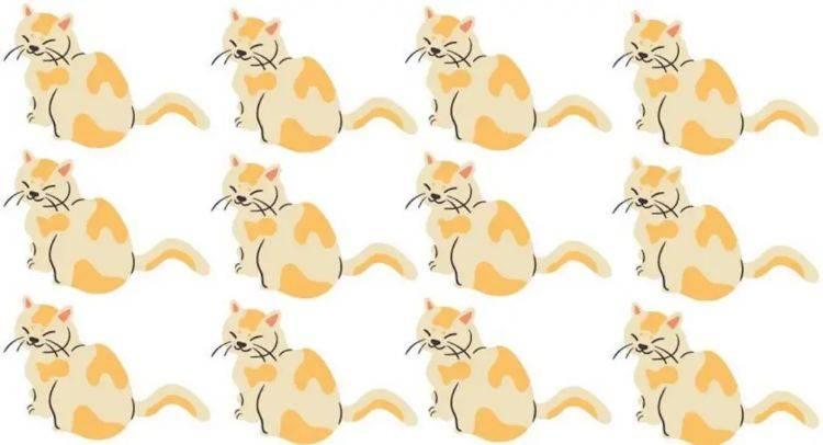 test gatto capacità di percezione
