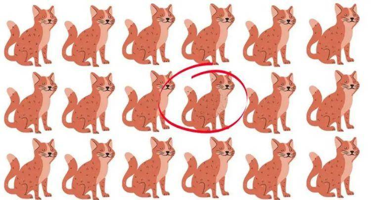 test gatti soluzione