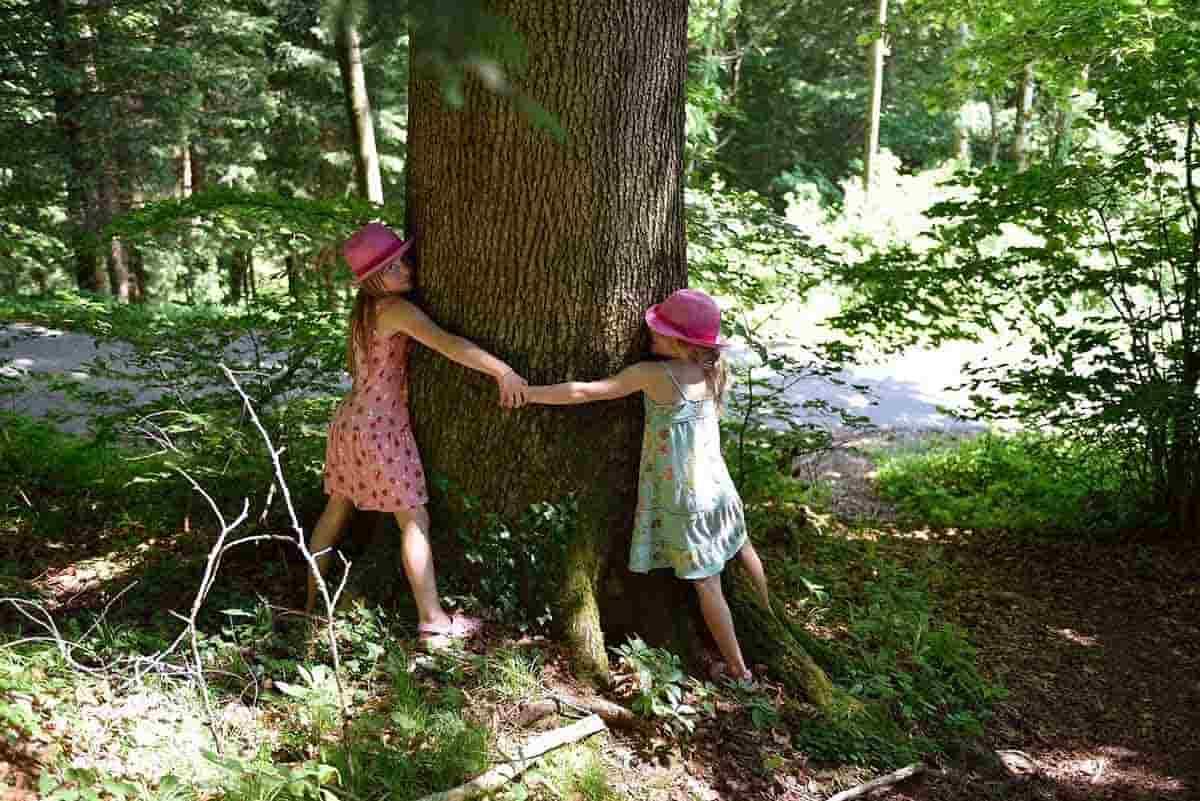 abbracciare alberi