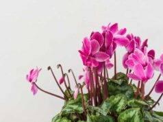 Balcone autunnale le piante da coltivare, consigli, video