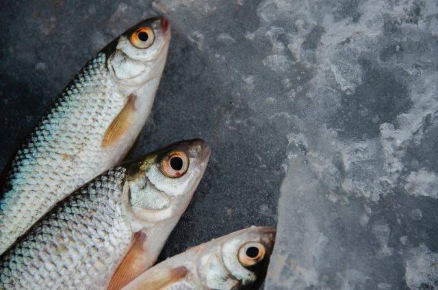 Pesce: per quanto tempo può essere congelato? Trucchi e consigli