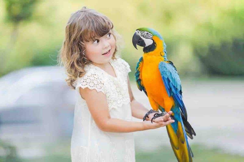 pappagallo zoo