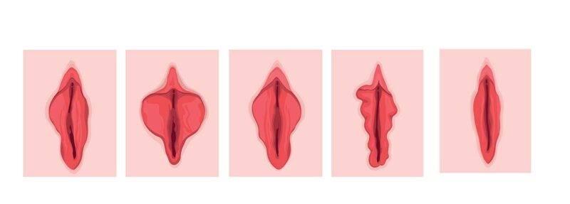diversi tipi di vagina