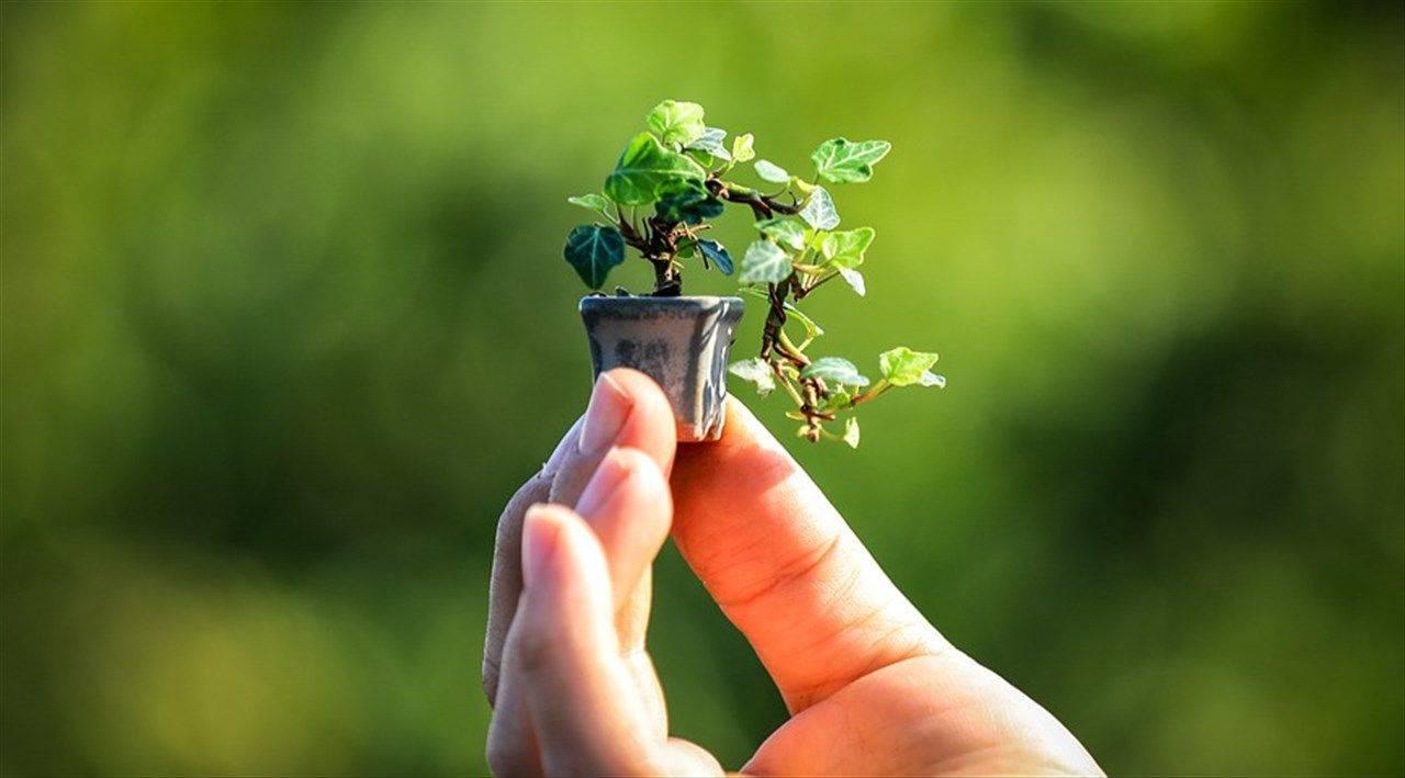 crescere bonsai