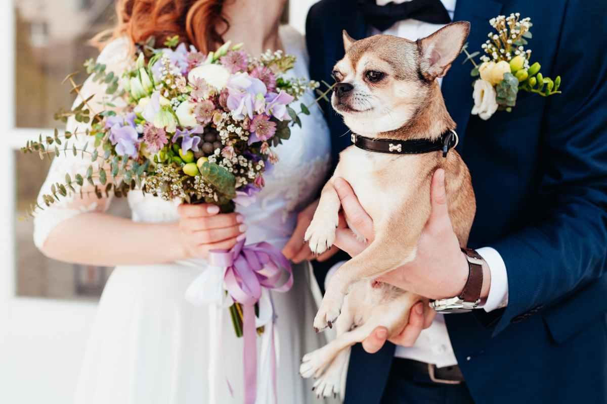 amici a 4 zampe al matrimonio