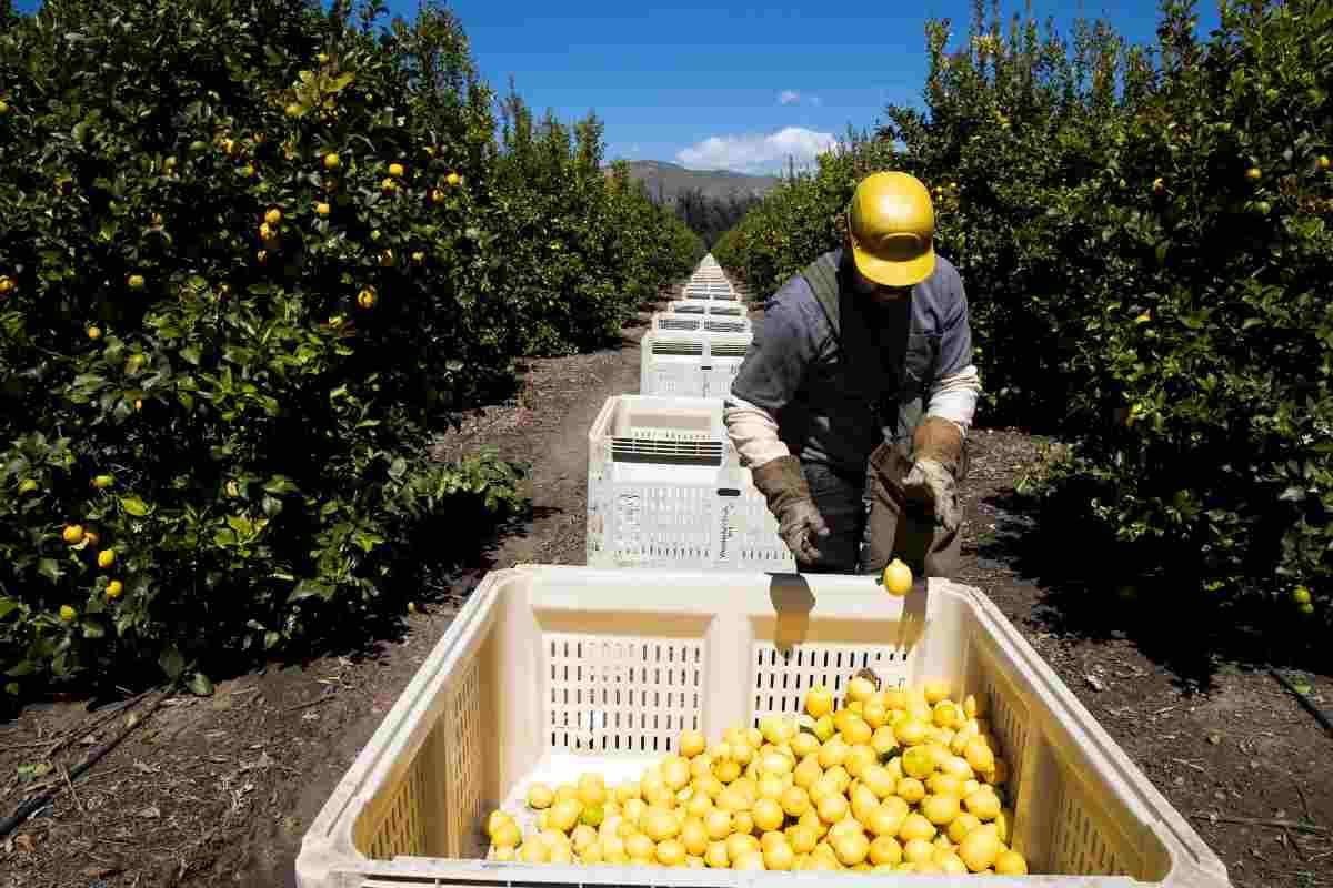 Crisi Covid: in ginocchio l'agroalimentare italiano