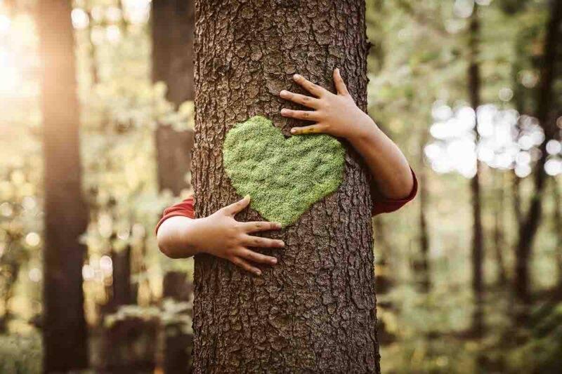 Natura, albero