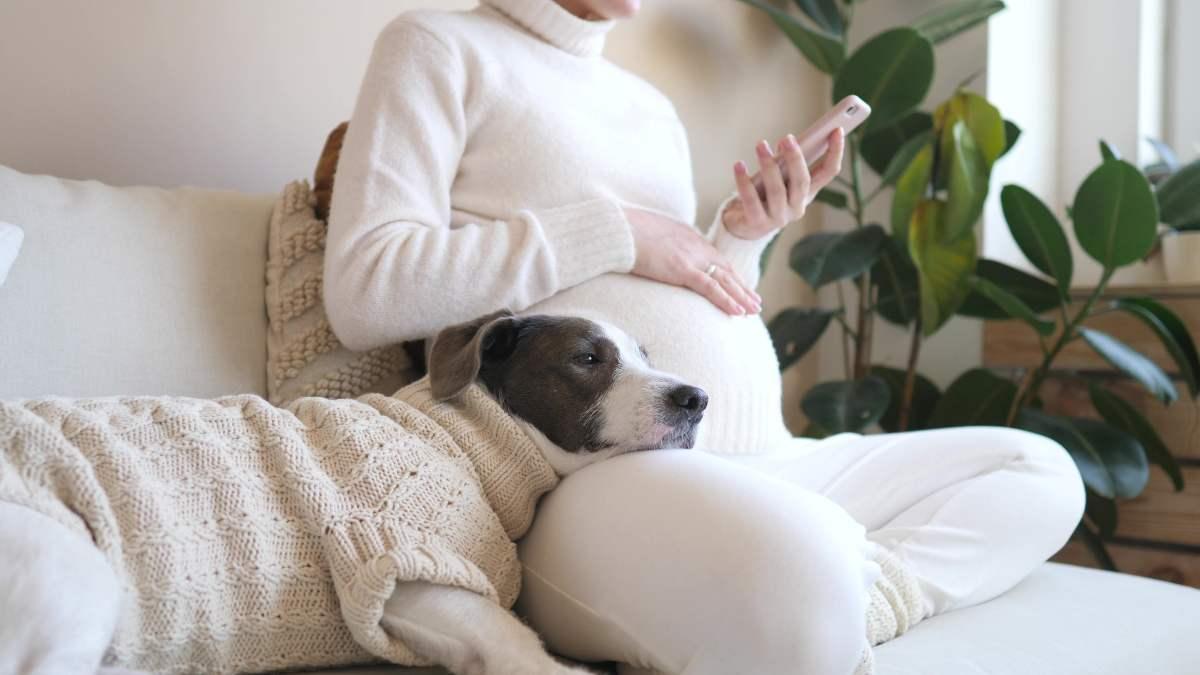 Settimane di gravidanza: le migliori app da scaricare