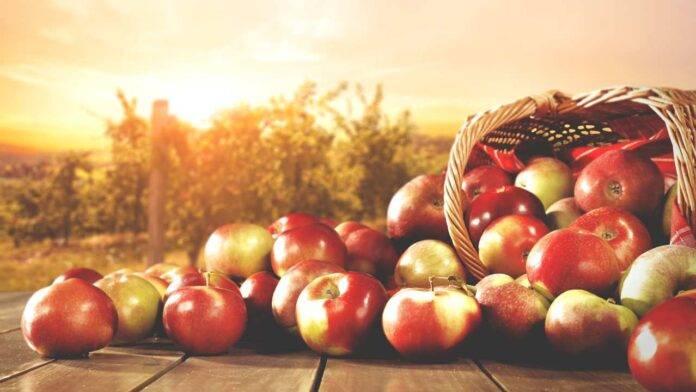 pranzo a base di mele