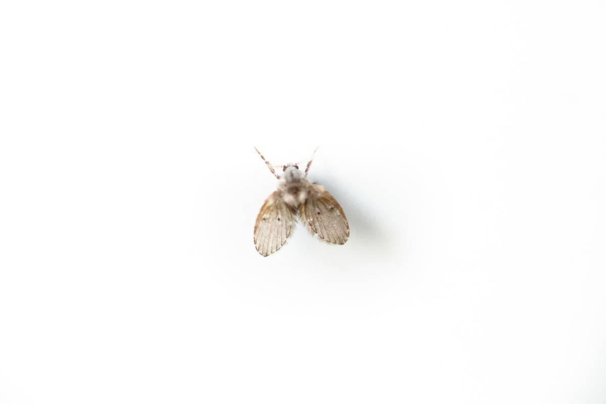 Ecco come far sparire mosche e moscerini in casa: tutti i trucchi utili