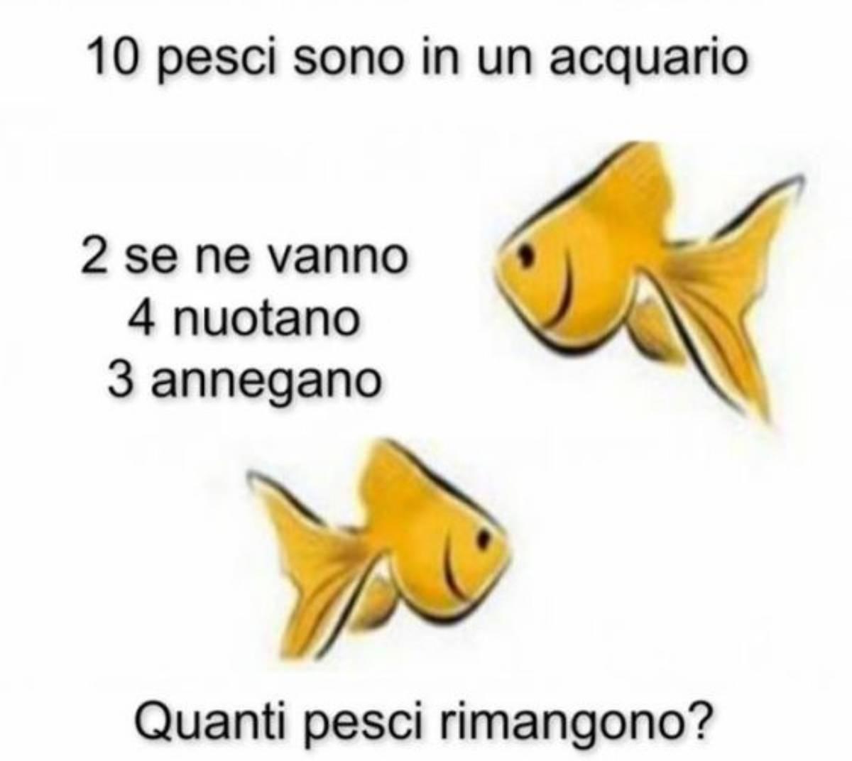 risolvi l'enigma