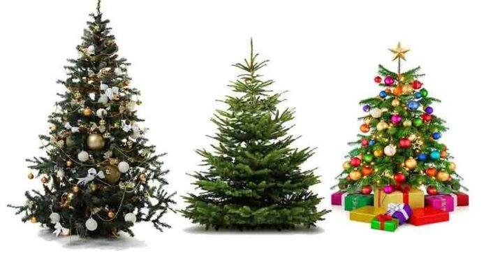 Albero di Natale personalità