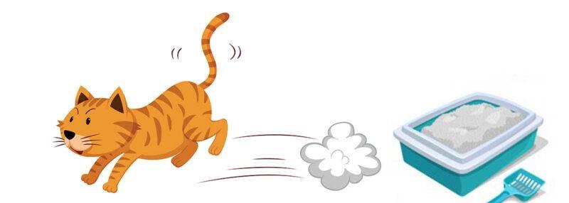 gatto che fa i bisogni