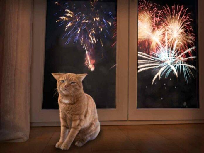 animali e fuochi d'artificio