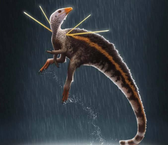 dinosauro pavone