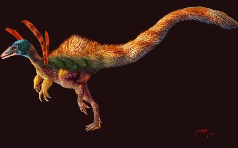 dinosauro Ubirajara jubatus