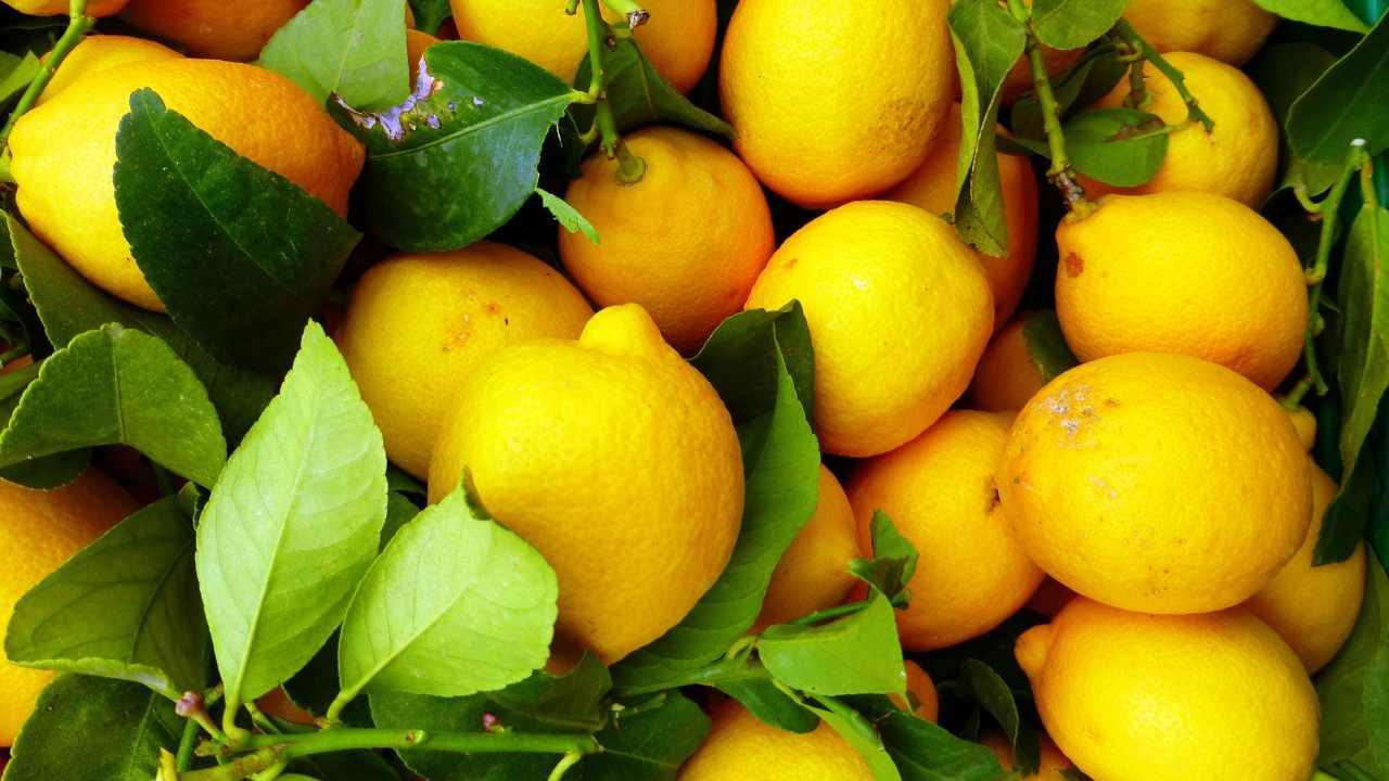 limone menù