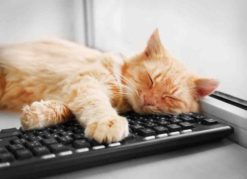 gatto sul computer