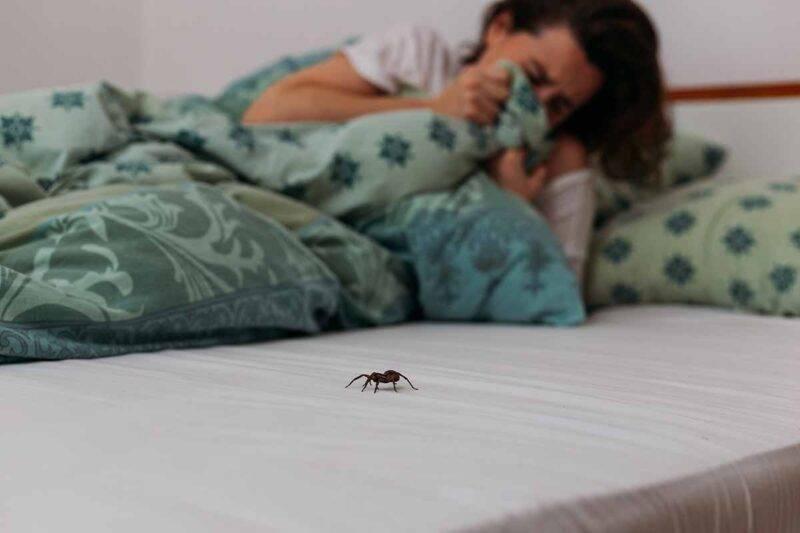 ragno nel letto