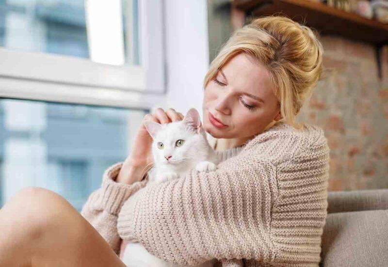 gatto relax e coccole