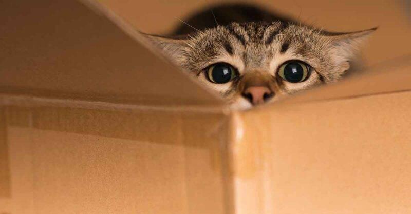 gatti scatola